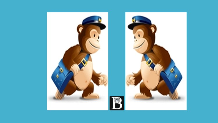 Mailchimp tutorial Step by step in depth
